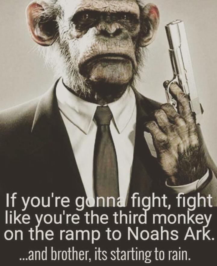 3rd-monkey